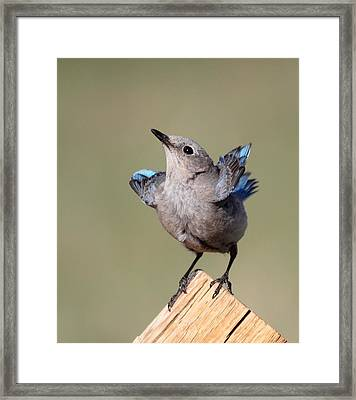 Pretty Pose Framed Print