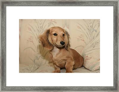 Pretty Pup Framed Print
