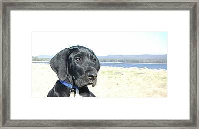 Pretty Puppy 2 Framed Print by Sarah Goodbread