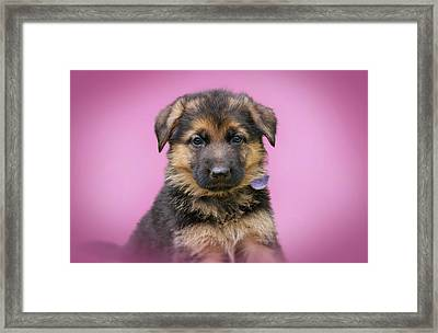 Pretty Puppy In Pink Framed Print