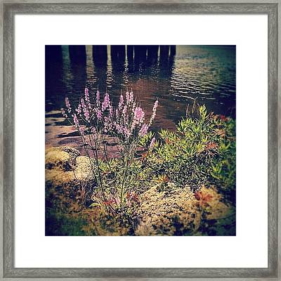Pretty Purple Flowers Along The Bayou Framed Print