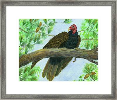 Pretty Redhead Turkey Vulture Framed Print
