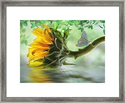 Pretty Sunflower Framed Print by Nina Bradica