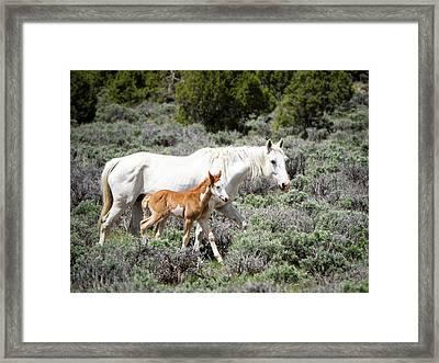 Pretty White Mustang Mare With Her New Foal - Sand  Wash Basin Framed Print