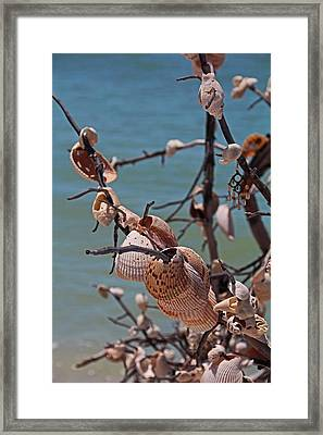 Framed Print featuring the photograph Previously Loved Treasures by Michiale Schneider