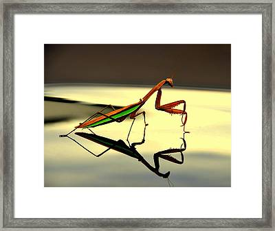 Preying Mantis Framed Print by Aron Chervin