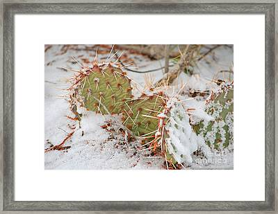 Prickley Pear Cactus Framed Print by Donna Greene