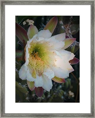 Framed Print featuring the photograph Prickley Pear Cactus by Kate Word