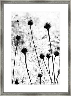 Framed Print featuring the photograph Prickly Buds by Deborah  Crew-Johnson