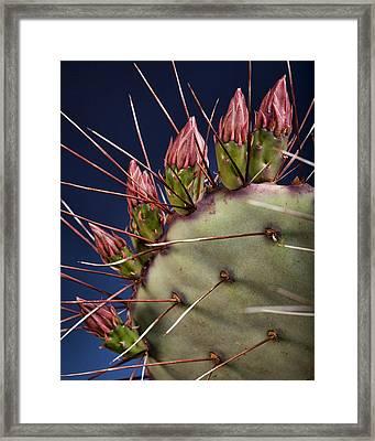 Prickly Buds Framed Print by Kelley King