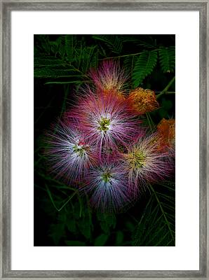 Prickly Flower Framed Print by Christopher Lugenbeal