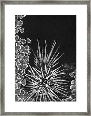Prickly Pair Framed Print