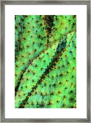 Framed Print featuring the photograph Prickly by Paul Wear