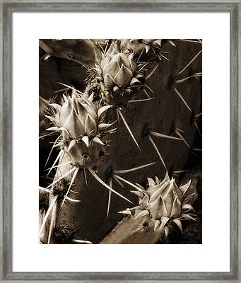 Prickly Pear Buds Framed Print