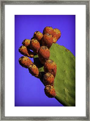 Prickly Pear Cacti Framed Print by Garry Gay