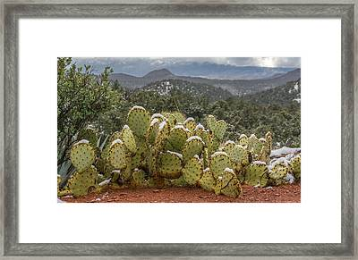 Cactus Country Framed Print