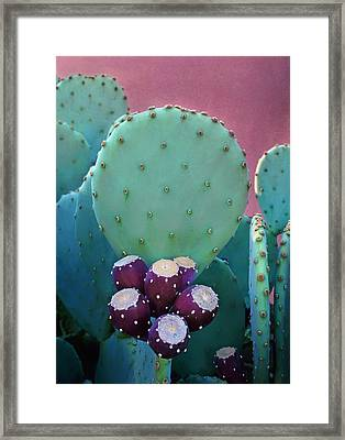 Prickly Pear - Cactus - Spineless Framed Print by Nikolyn McDonald