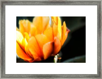 Prickly Pear Flower Framed Print