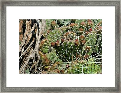 Prickly Pear Revival Framed Print