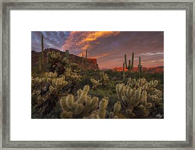 Prickly Pink Peralta Framed Print by Peter Coskun