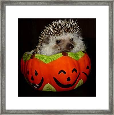 Prickly Pumpkin Framed Print