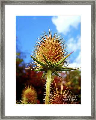 Prickly Thistle Framed Print by Nina Ficur Feenan