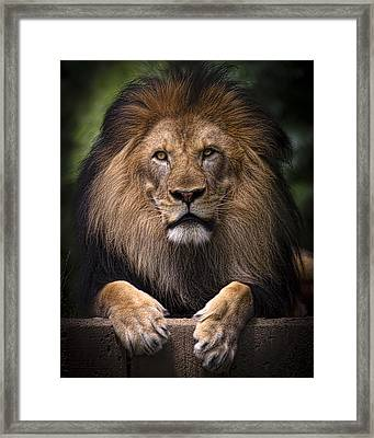 Framed Print featuring the photograph Pride by Cheri McEachin