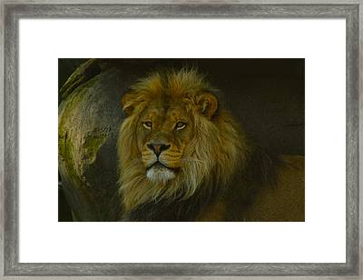 Pride Land Framed Print