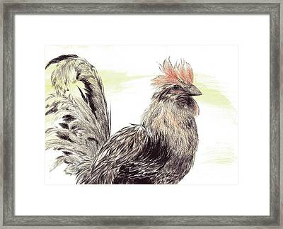 Pride Of A Rooster Framed Print