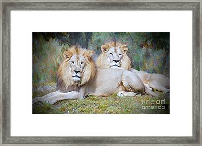 Pride Of Africa Framed Print by Judy Kay