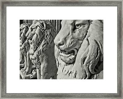 Pride Of Lions Framed Print by JAMART Photography