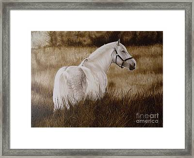 Pride Of The Lough  Framed Print by Pauline Sharp