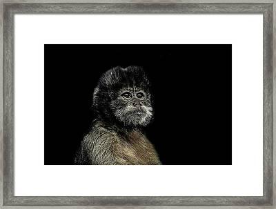 Pride Framed Print by Paul Neville