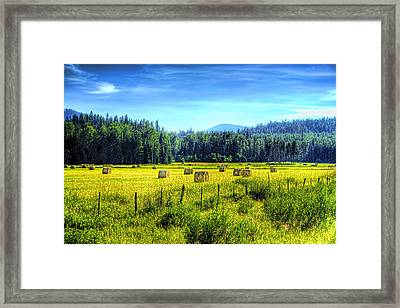 Priest Lake Hay Framed Print by David Patterson