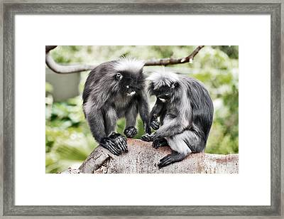 Framed Print featuring the photograph Primal Love by Stephen Mitchell