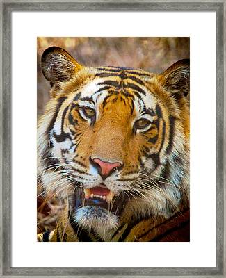 Prime Tiger Framed Print