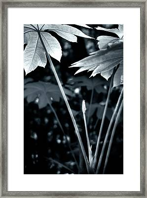 Framed Print featuring the photograph Primordial by Kevin Bergen