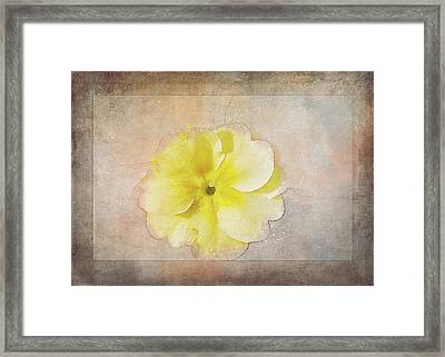 Primrose Etched In Stone Framed Print