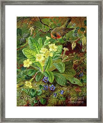 Primrose And Robin Framed Print by William John Wainwright