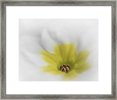 Primrose Framed Print by David and Carol Kelly