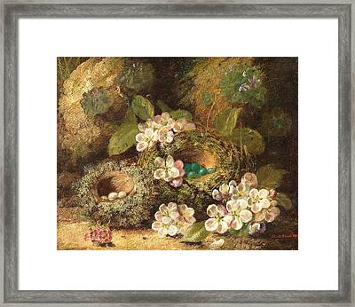 Primroses And Bird's Nests On A Mossy Bank Framed Print by Oliver Clare
