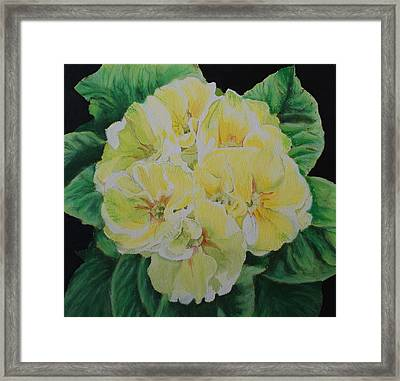 Primroses Framed Print