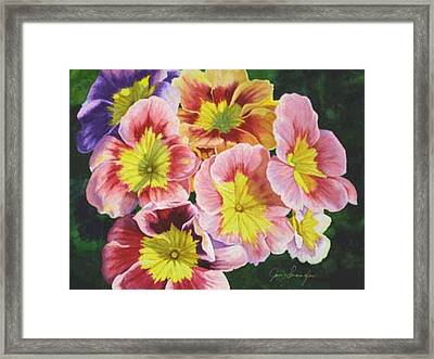 Primroses Framed Print by Jan  Spangler