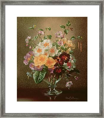 Primulas In A Glass Vase  Framed Print by Albert Williams