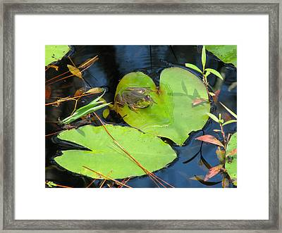 Framed Print featuring the photograph Prince Charming by Peg Urban