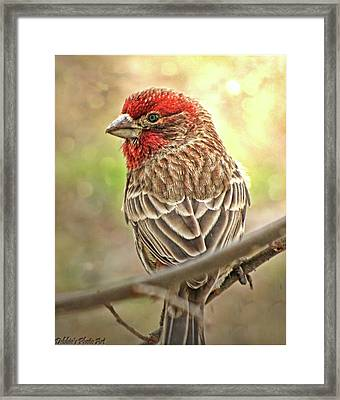 Framed Print featuring the photograph Prince  by Debbie Portwood