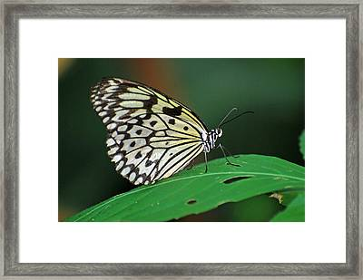 Framed Print featuring the photograph Prince Of The Flower  by Teresa Blanton