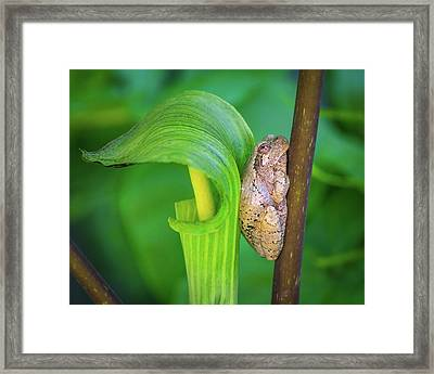 Prince Of The Pulpit Framed Print