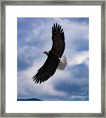 Prince Rupert Soaring Eagle Framed Print