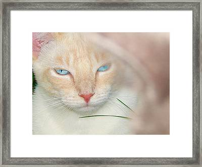 Prince Willy Framed Print by Laura Brightwood